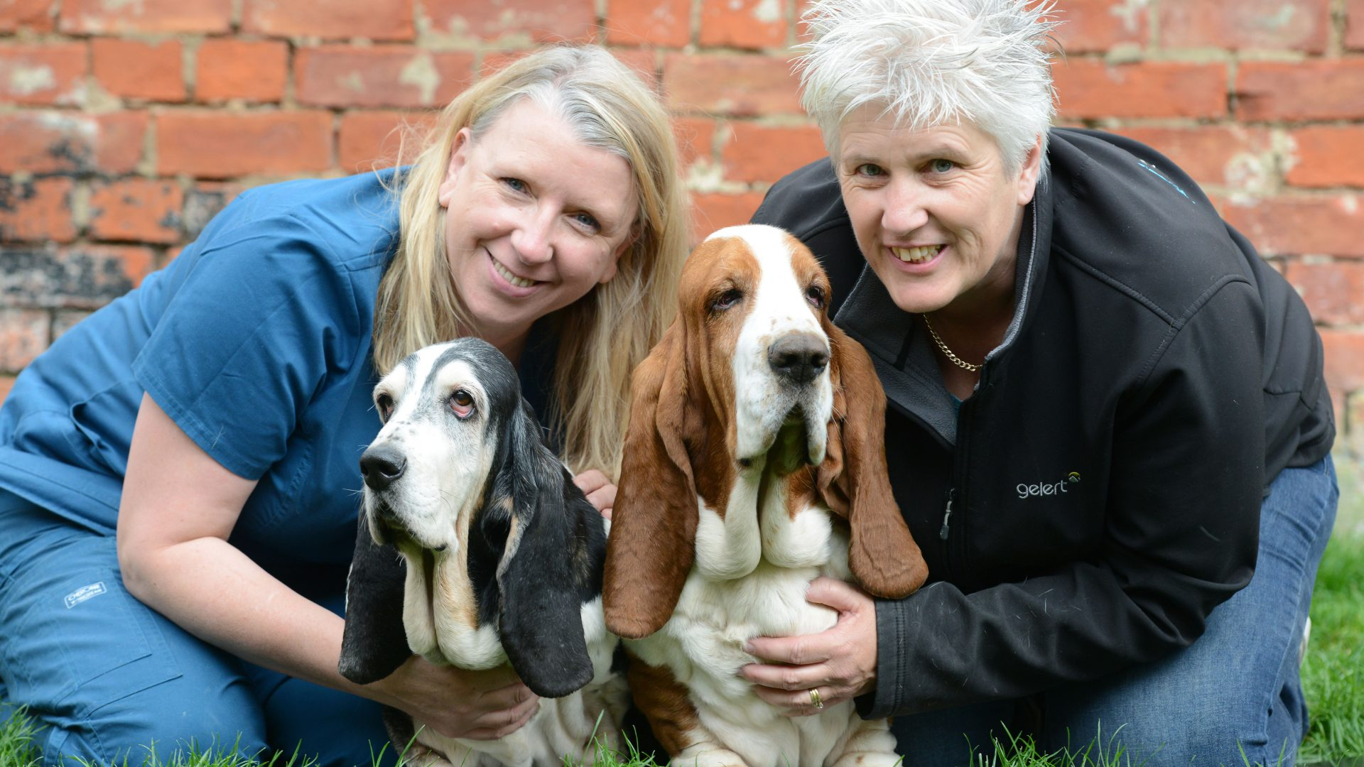 Appeal for dogs to help save lives – by giving blood