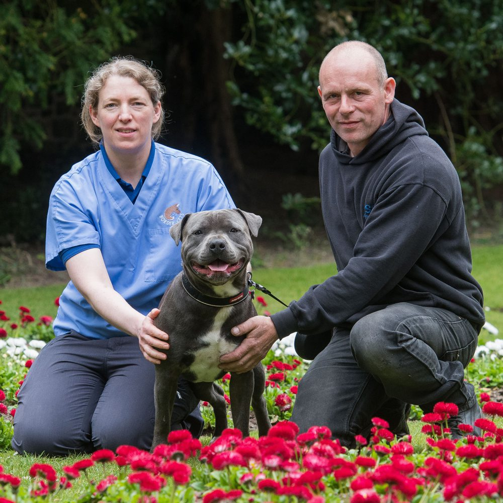 Warning to dog owners after Staffie nearly dies from eating mouldy food