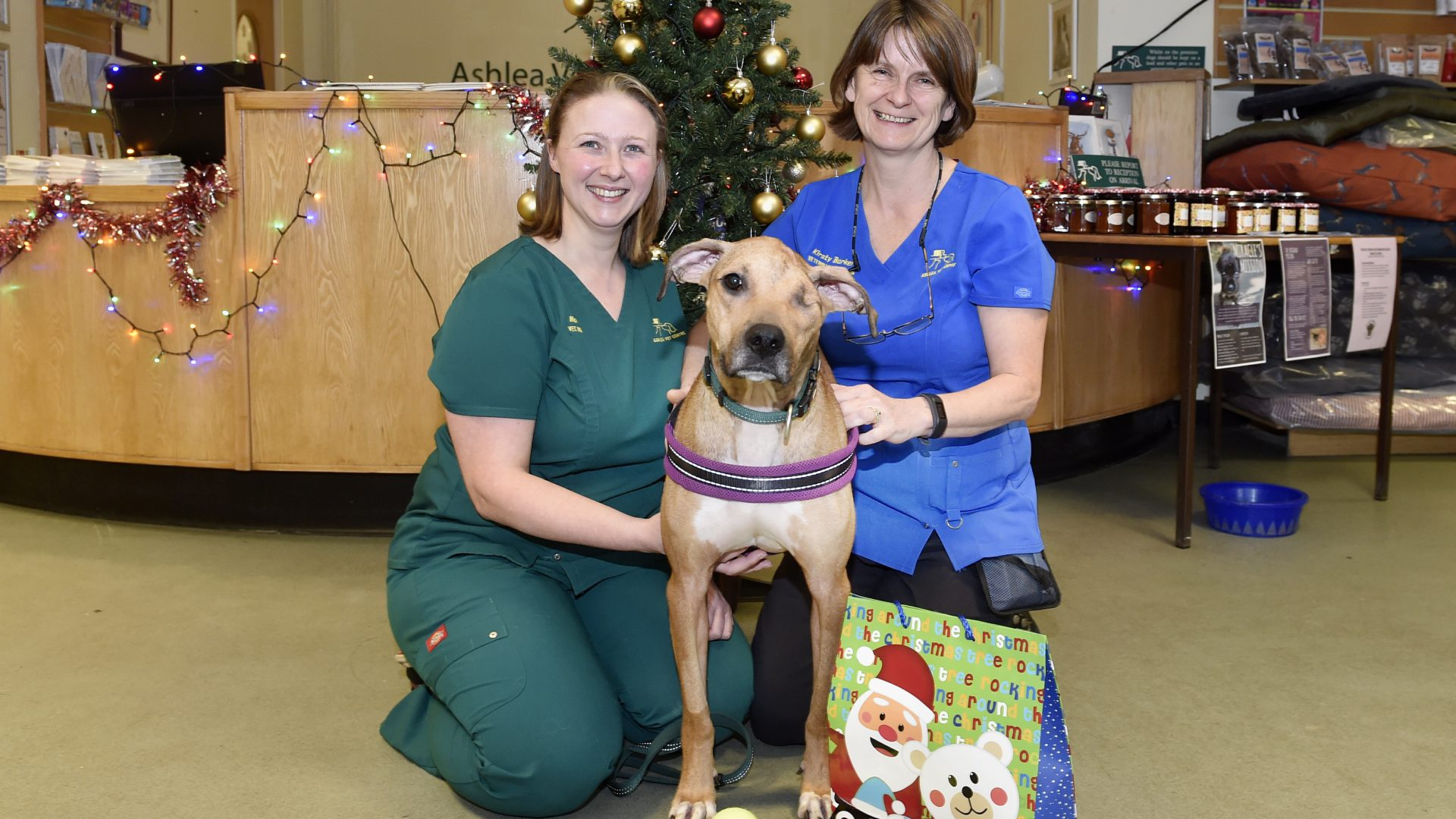 Christmas miracle as Bruce finds new home with nurse who helped to save him
