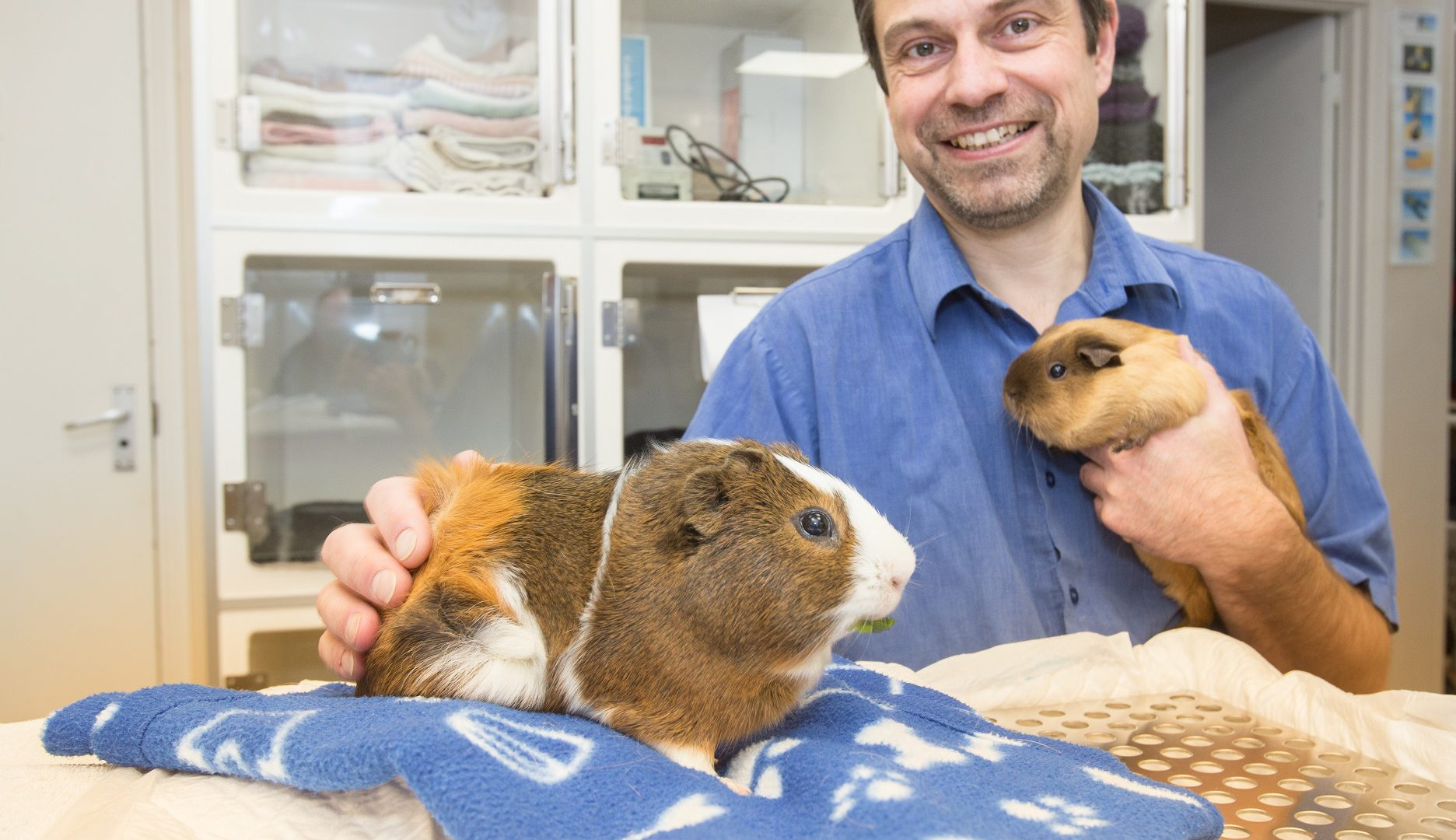 Is Northampton the UK's hotspot for the treatment of guinea pigs?