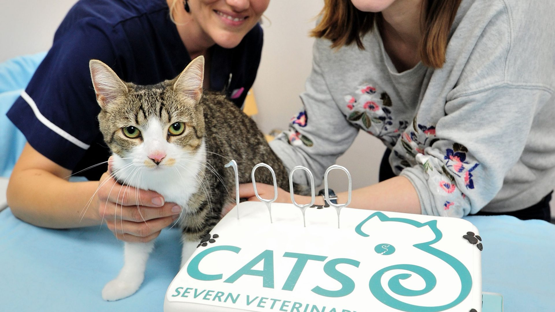 Miracle kitten is VIP guest at anniversary celebration of practice that saved her