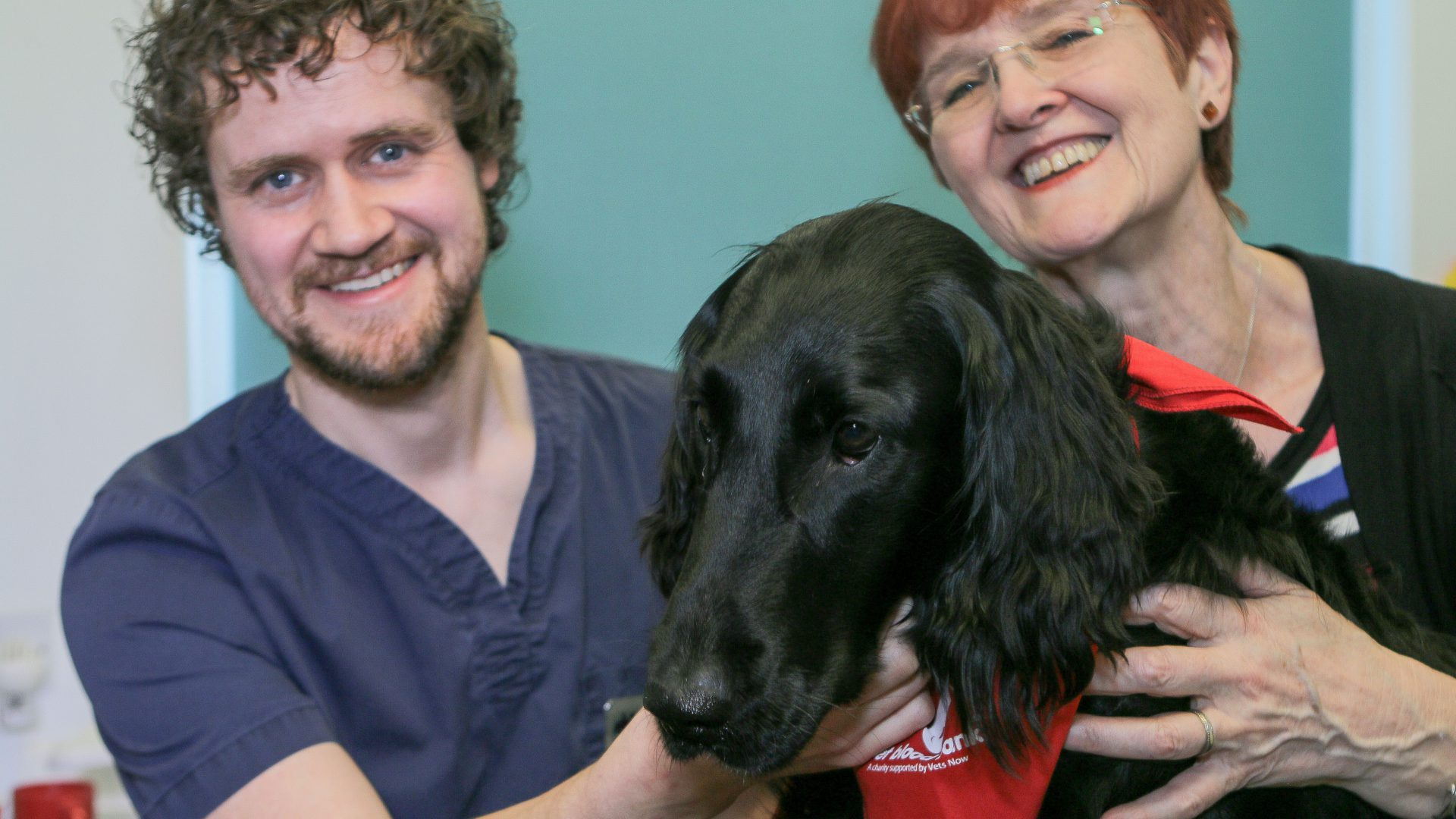 Donor Dexi leads Woodcroft Vets appeal for dogs to help save lives – by giving blood