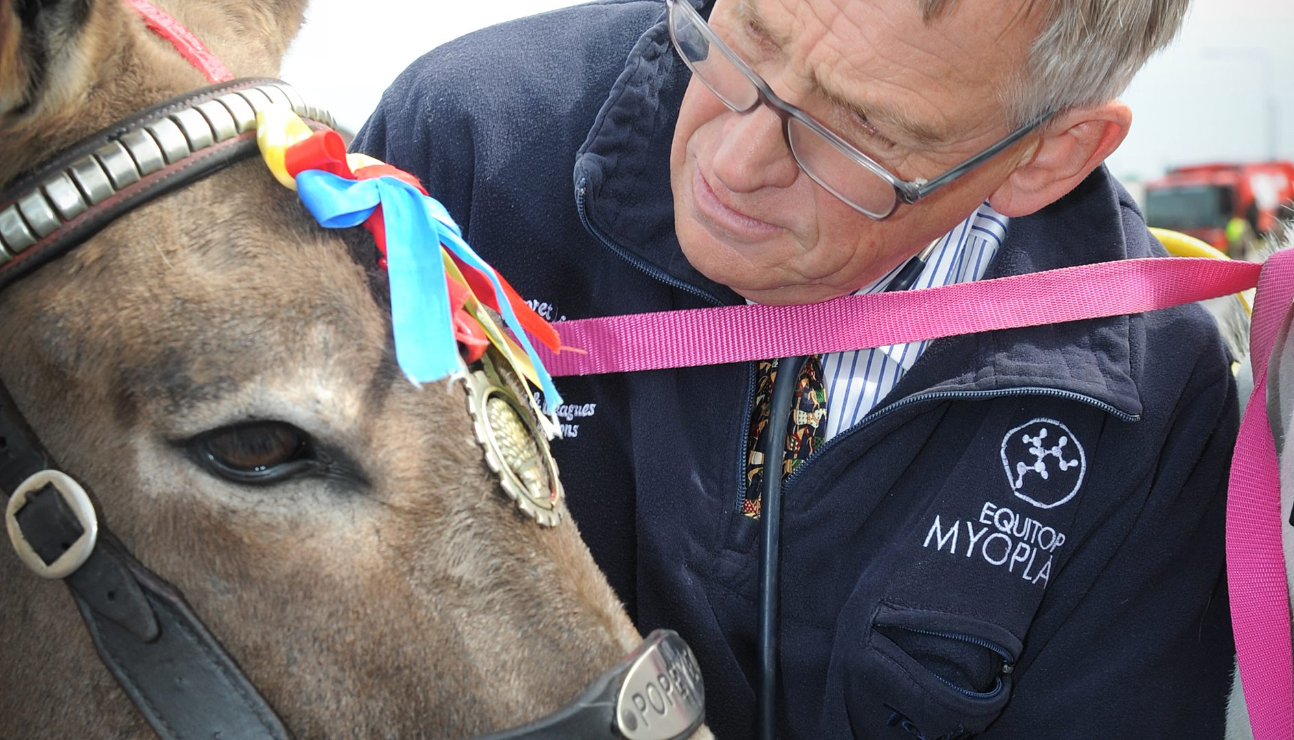 Caring vets do donkey work in preparation for Blackpool summer season