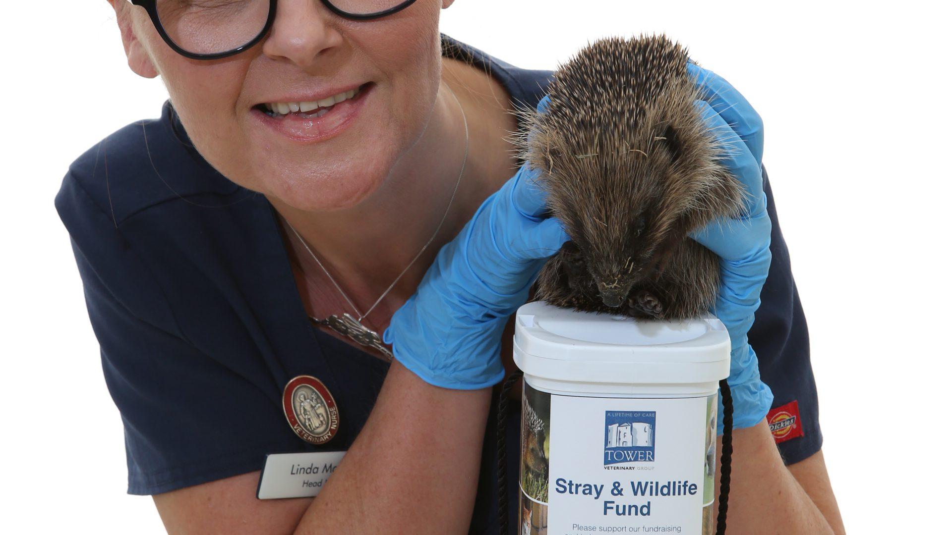 'Hedge' fund will help York's stricken pets and wildlife