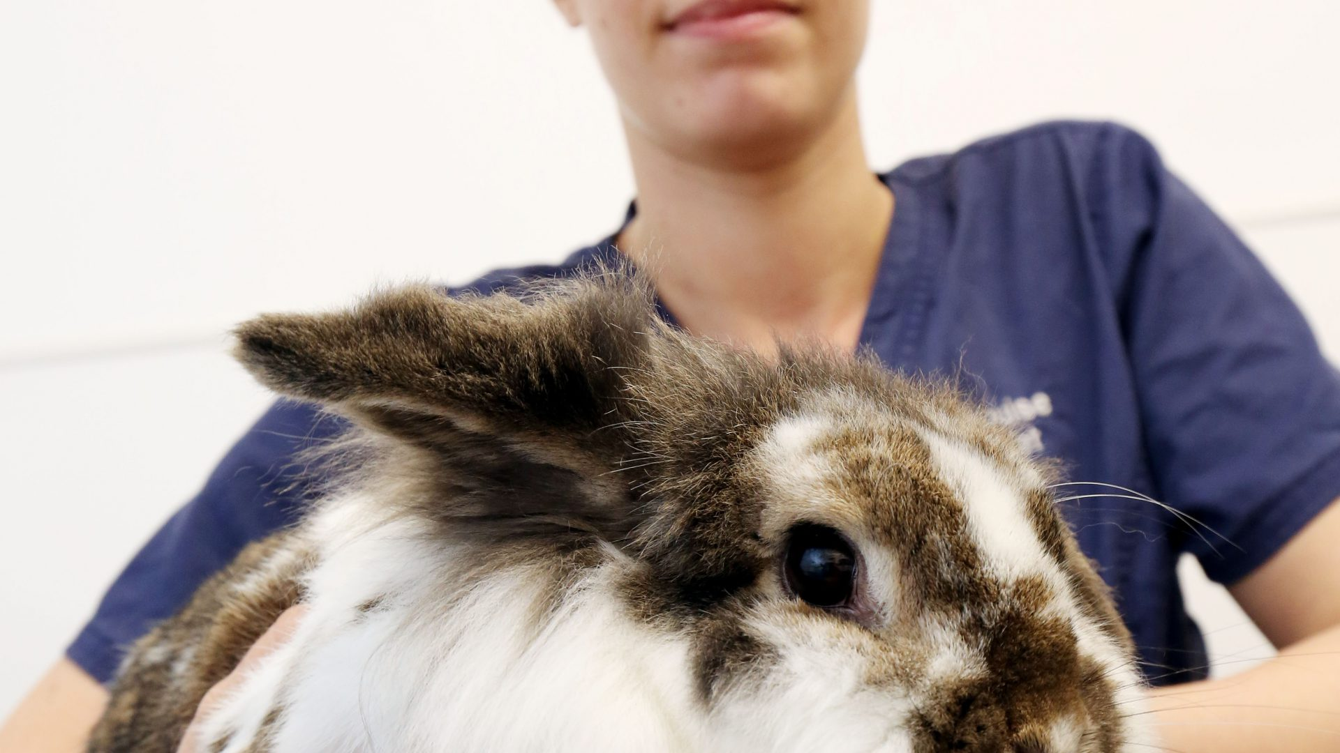 Rabbit owners urged to vaccinate pets after fatal disease warning
