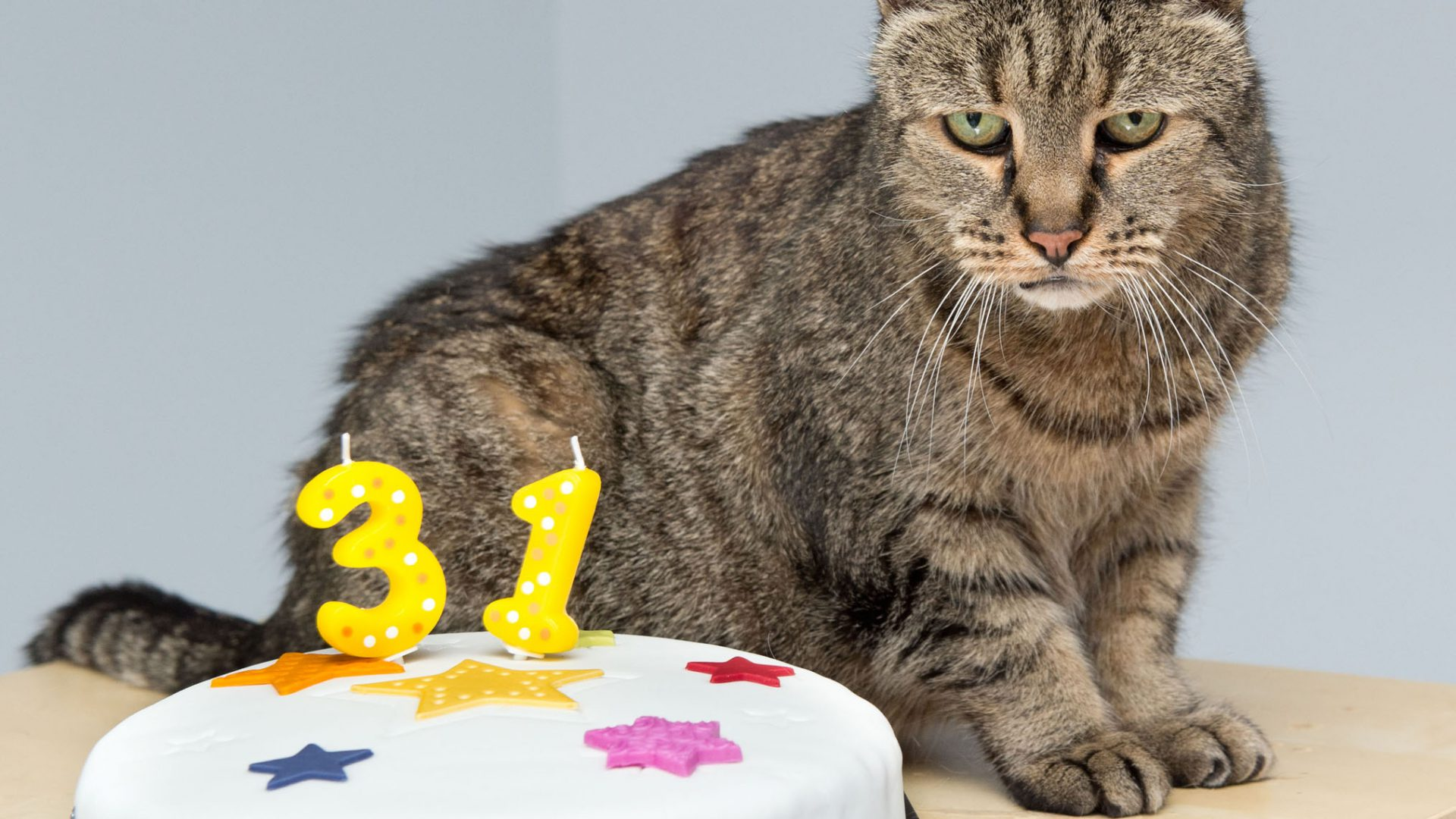 Cat thought to be oldest in the world passes away at 32