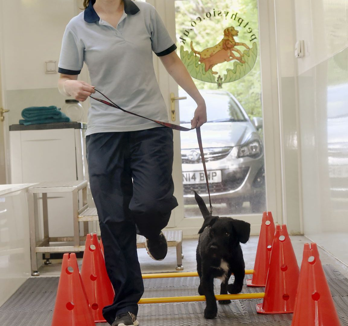 Cats and dogs getting back on their paws – thanks to physiotherapy