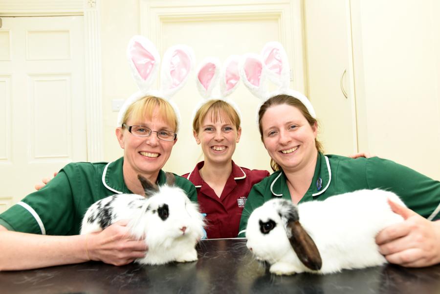 VetPartners pricks up their ears for Rabbit Awareness Week