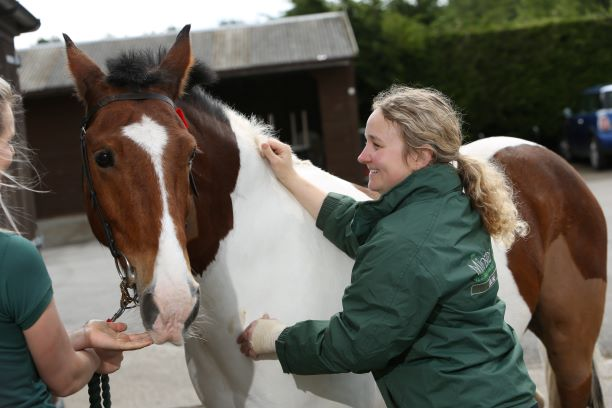 Warning to horse owners after UK outbreak of equine flu