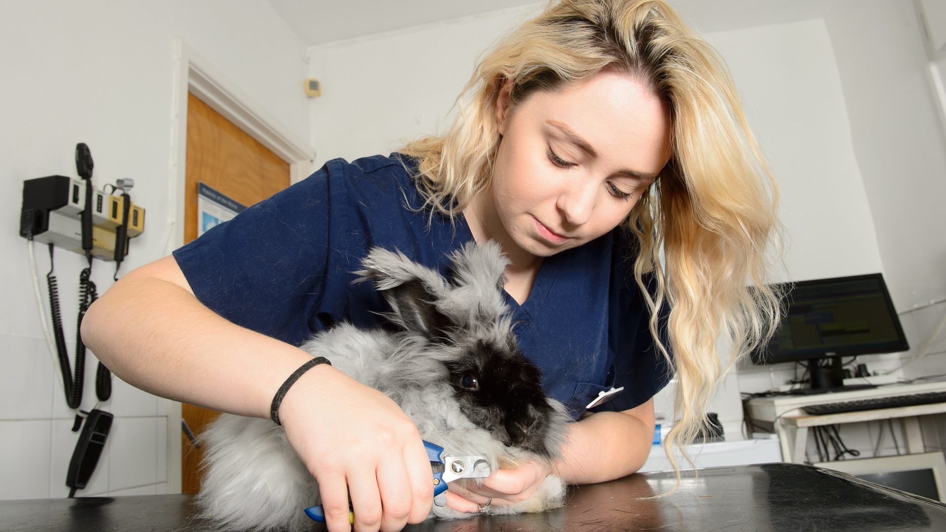 Rabbit owners can hop along to veterinary practice's Easter clinics