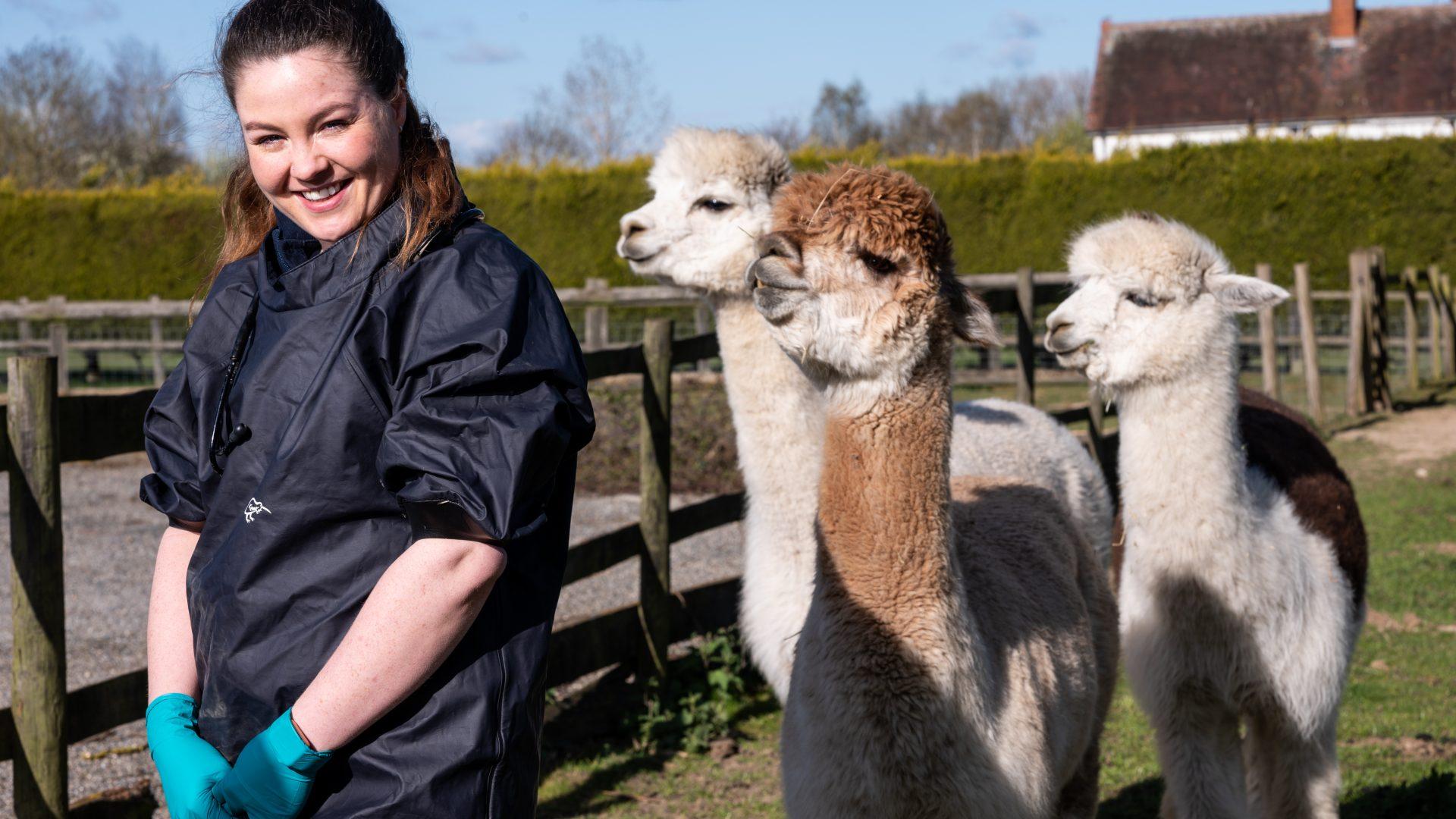 Camelid care is no llama drama
