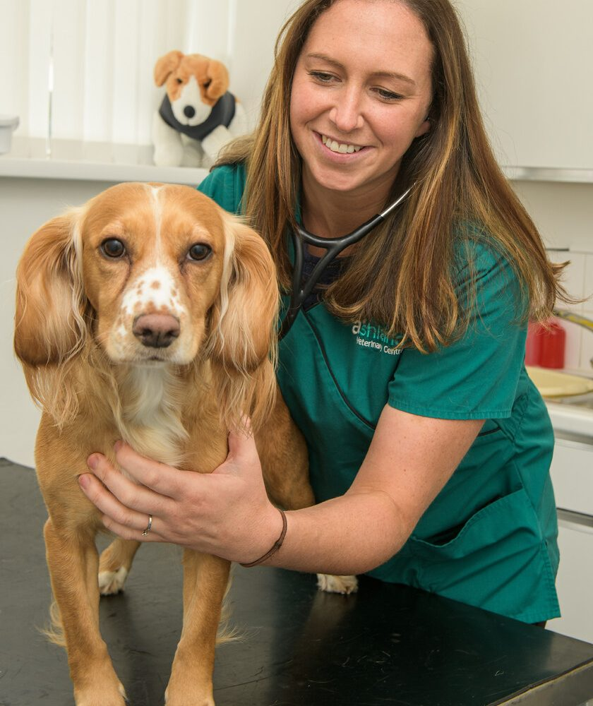 How vet Nikki is happy juggling family and a thriving career